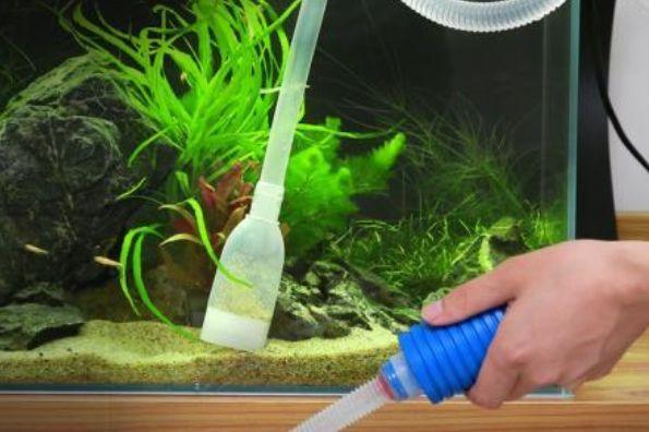 鱼缸怎么清洗 清洗鱼缸的小技巧-1